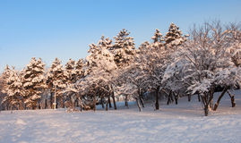 Trees landscape at the winter in park. Landscape at the winter in park stock photography