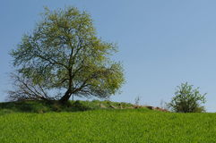 trees landscapes Royalty Free Stock Photos
