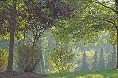 Trees in Late Summer. Trees of various shades of green with sun filtering through Stock Photography