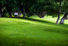 Trees and lawn Stock Photos