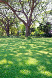 Trees and lawn Royalty Free Stock Image