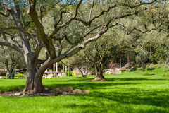 Trees and lawn Stock Image