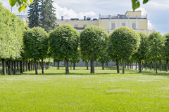 Trees and lawn. Royalty Free Stock Images