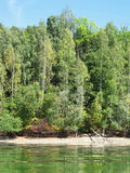 Trees on the lbank of a dam Stock Image