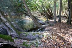 Trees leaning over rushing river Stock Photo