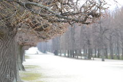 Winter. A seasonal road in winter that is lined with snow covered trees in winter. Shot in Vienna Stock Images