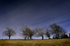 Trees without leaves Stock Photos