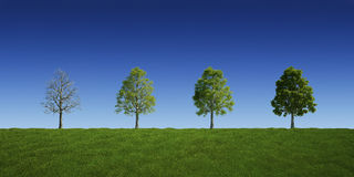 Trees with and without leaves Royalty Free Stock Photos