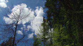 Trees and leaves against the blue sky. Nature begins to blossom. Spring.  stock video