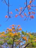 Trees and leaves beauty coloful in park Stock Images