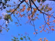 Trees and leaves beauty coloful in park. In Thailand royalty free stock image