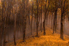 Trees and leaves. European native forests in autumn collors Royalty Free Stock Photography