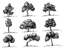 Trees with leaves. An images of trees with leaves Stock Photos