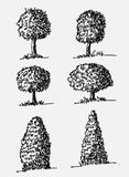 Trees with leaves. Images of trees with leaves design Stock Photography
