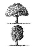 Trees with leaves. Images of trees with leaves design Stock Image