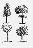 Trees with leaves. Images of trees with leaves and  tree silhouettes Stock Photo