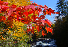 Trees and leaves on indian summer, Quebec, Canada Stock Images