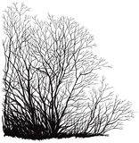 Trees without leaves Stock Images
