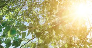 Trees leaves. Nature green wood sunlight footage. Hello summer concept stock footage