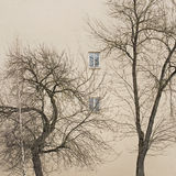 Trees without leaves Royalty Free Stock Photography