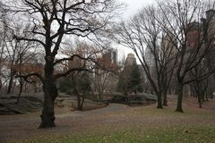 Fall in central park manhattan stock photography