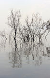 Trees without leaves reflected in the water Royalty Free Stock Photo