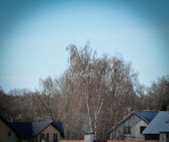 Trees without leaves and roofs Stock Image