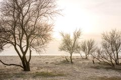 Trees at sunset by the sea in early spring. stock image