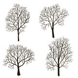 Trees without leaves silhouette Royalty Free Stock Images