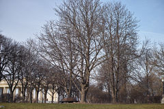Trees without leaves Royalty Free Stock Photo