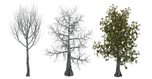 Trees with and without leaves Stock Images