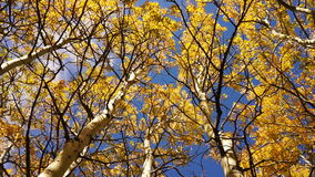 Trees Leaves Wind Blown Autumn Nature Scene Fall Color stock footage