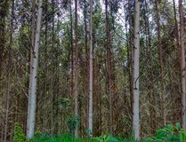 Trees without leaves after winter royalty free stock photography