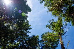 Trees and Lens Flare Stock Photography