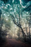 Branches in the mist. Trees in Leudal, Netherlands Royalty Free Stock Photos