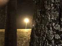 Trees. Light behind tree night paris automne Royalty Free Stock Photography