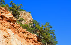Trees on a limestone cliff Royalty Free Stock Photography