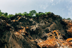 Trees on the limestone cliff. Royalty Free Stock Photo
