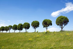 Trees in a line Royalty Free Stock Image
