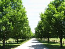 Trees line a country lane on a sunny summer day Stock Images