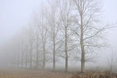 Trees line in fog Stock Photo