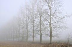 Trees line in fog Stock Photo