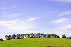 Trees Line Grassy Hillside Royalty Free Stock Photo