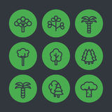 Trees line icons, palms, firs, baobab, eucalyptus Stock Photo