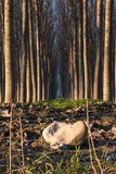 Trees in line inside forest Stock Image