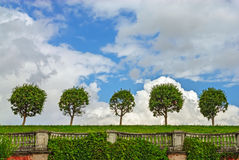 Trees in line on lawn Royalty Free Stock Photography