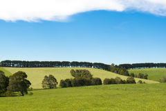 Trees in line Stock Photography