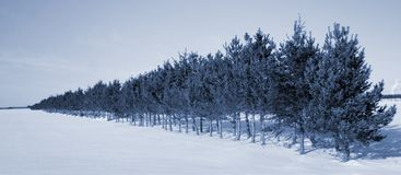 Trees line in winter Stock Photo