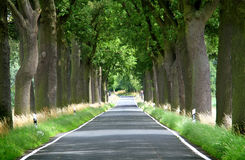 Trees lined country road Royalty Free Stock Images