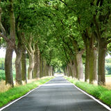 Trees lined country road Royalty Free Stock Photos
